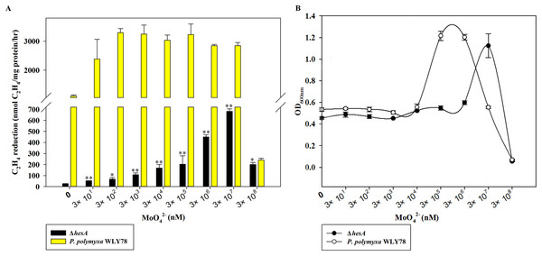 Effect of the molybdate concentration on nitrogenase activity (A) and maximum growth (B) of P. polymyxa WLY78 and the ΔhesA mutant.