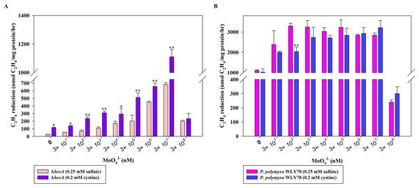 Effect of the sulfur sources on the nitrogenase activity of the ΔhesA mutant and P. polymyxa WLY78.