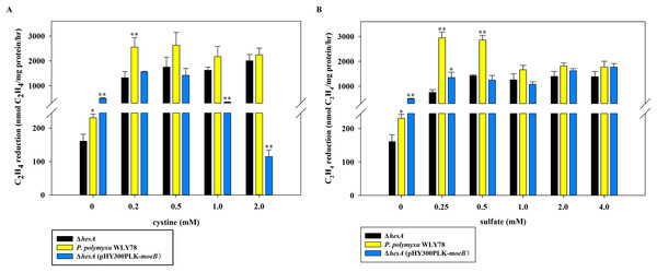 Effect of the different concentrations of cystine (A) or sulfate (B) on nitrogenase activity of ΔhesA, P. polymyxa WLY78 and the complemented strain ΔhesA (pHY300PLK-moeB).