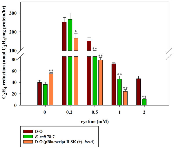 Effect of the cystine concentration on nitrogenase activity of the recombinant E. coli 78-7, the hesA deletion strain (D-O) and the complemented strain D-O (pBluescript II SK (+)- hesA).