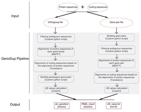 Workflow in GenoDup Pipeline.