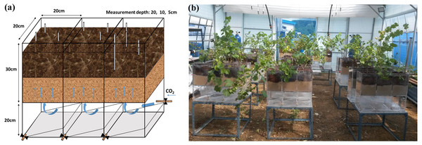 Injection box (A) and treatment layout in the greenhouse (B).