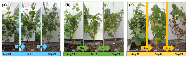 Morphological changes of plants during the experimental period.