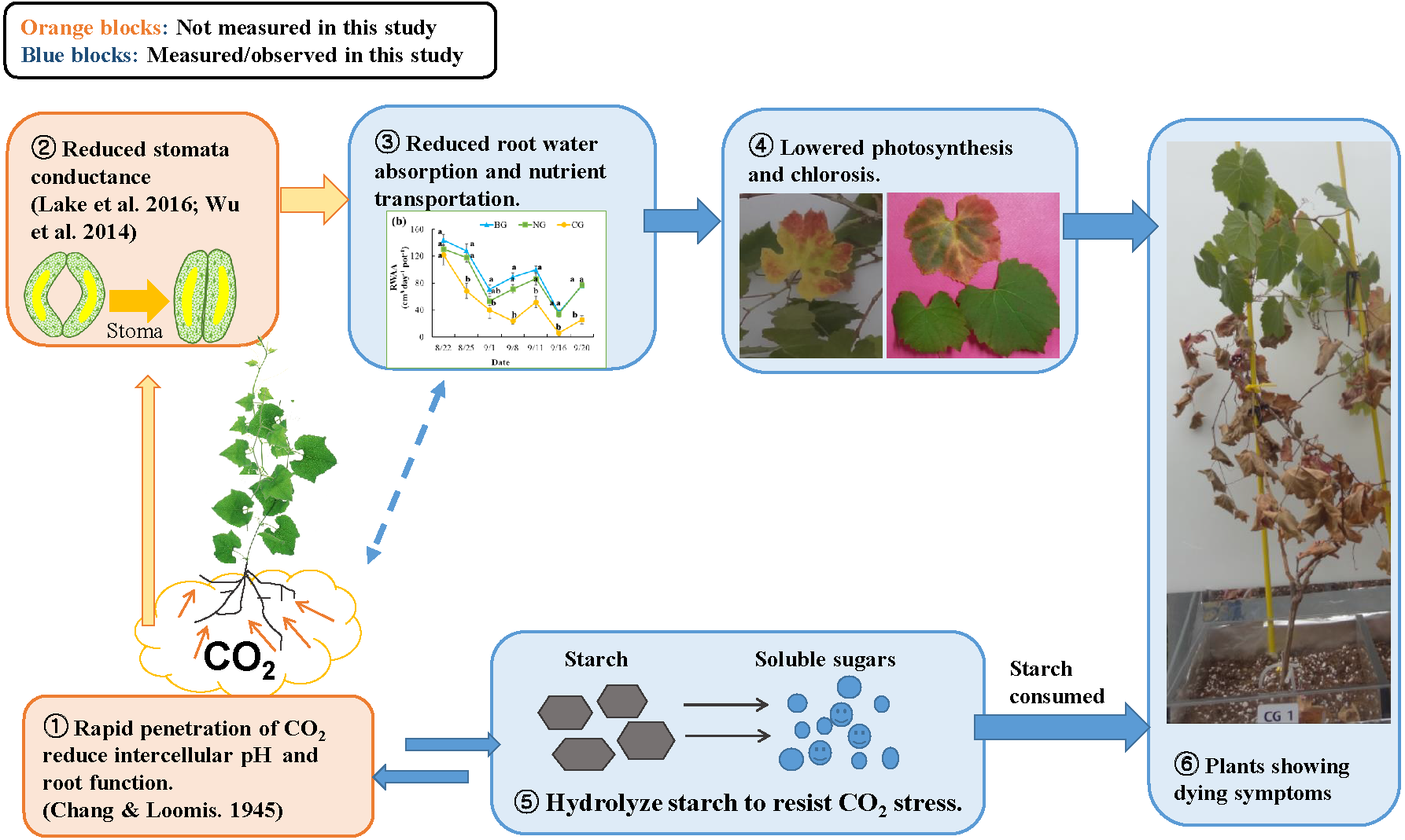 Impact assessment of high soil CO2 on plant growth and soil