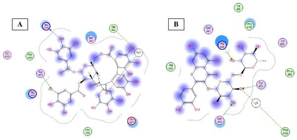 Molecular modeling.