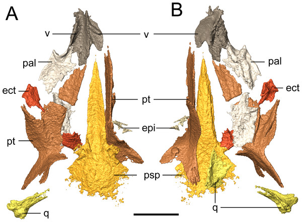 Selected profiles of the palate of referred specimen of Llistrofus pricei (OMNH 79031).