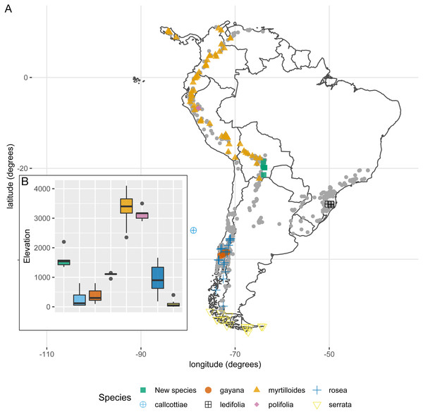 (A) Geographic distribution of species lacking support for morphological discontinuities vs the new species (E. harrisii). Grey points correspond to all other Escallonia species. (B) Elevation range of species lacking support for morphological discontinuities vs. the new species (E. harrisii).