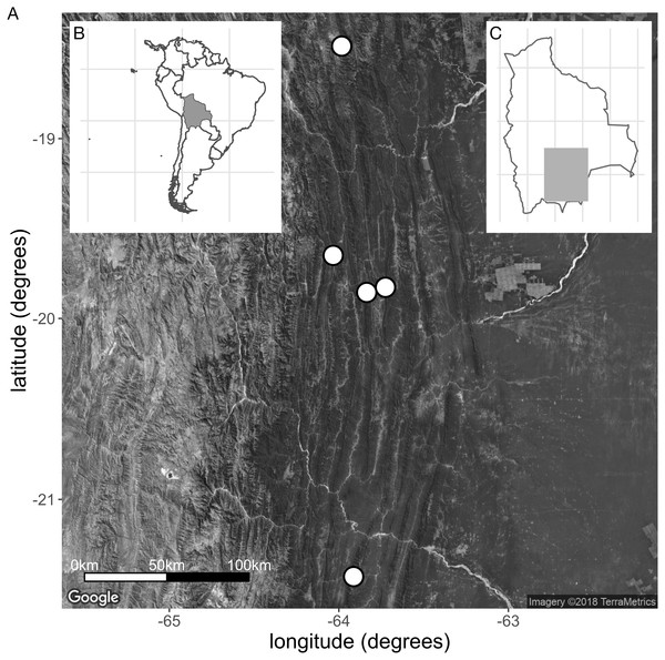 (A) Collection sites of the new species E. harrisii. (B) Map of South America, Bolivia shaded. (C) Map of Bolivia, area of A. shaded. (Map Credit: ©2018 Google, TerraMetrics).