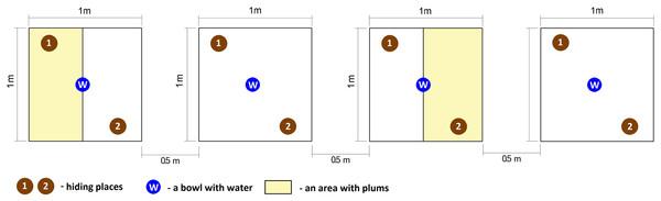 Graphical representation of experimental enclosures.