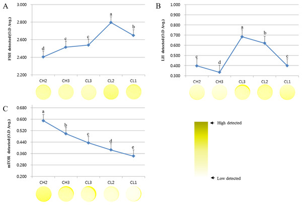 ELISA analysis of FSH, LH, and mTOR proteins at different stages of bovine corpus luteum.