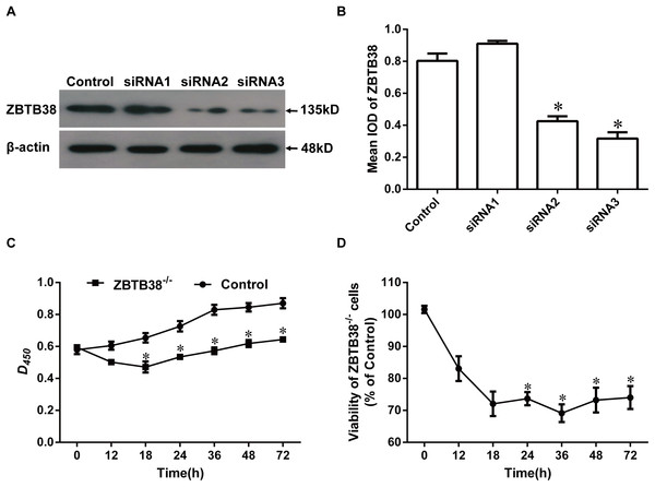 Proliferation and viability of ZBTB38 knockdown SH-SY5Y cells.
