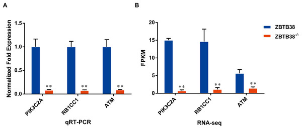 Differential expression analysis of candidate genes between ZBTB38−/− and ZBTB38 SH-SY5Y cells.