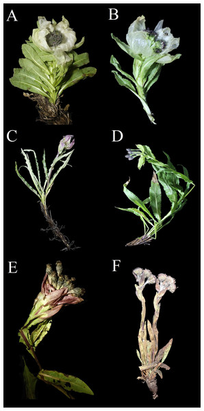 Photographs of six species sampled in the study.