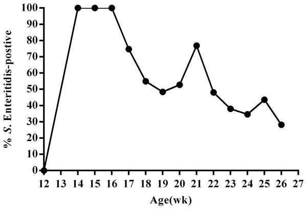 Percentage of SE-positive cloacal swabs from SE-infected ducks during the 13-week experimental period as detected by PCR and direct cultivation of microorganisms.