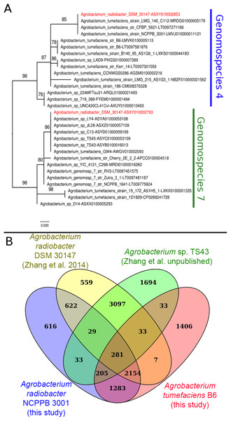 Phylogenetic and genomic evidence indicating contamination in the published A. radiobacter DSM 30147T genome.