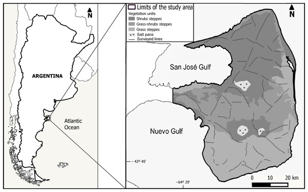 Location of the study area, distribution of the survey transects and vegetation units following Bertiller et al. (2017).