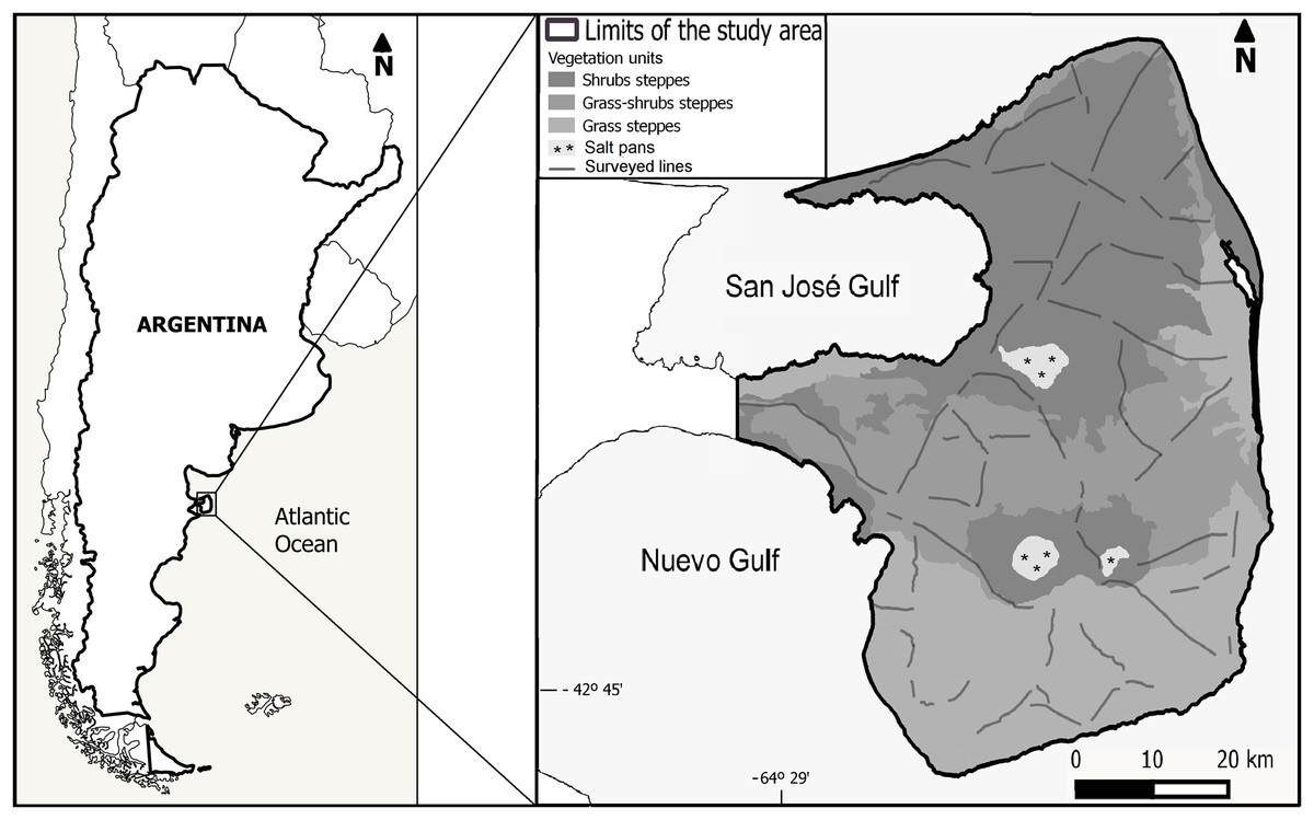 Modeling the spatial structure of the endemic mara