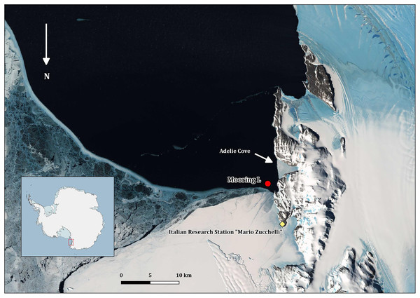 """Map of Terra Nova Bay with the position of the mooring """"L,"""" close to the Adélie penguin rookery."""