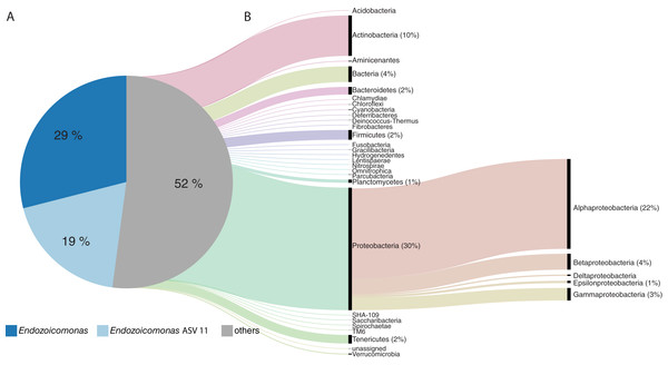 The taxonomic composition of the Acropora tenuis microbiome.