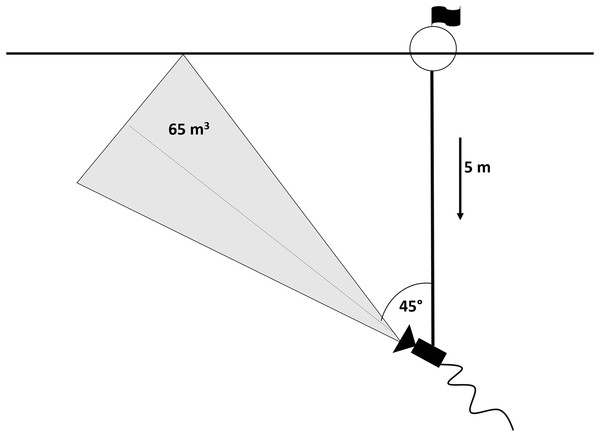 Scheme of the camera set-up.