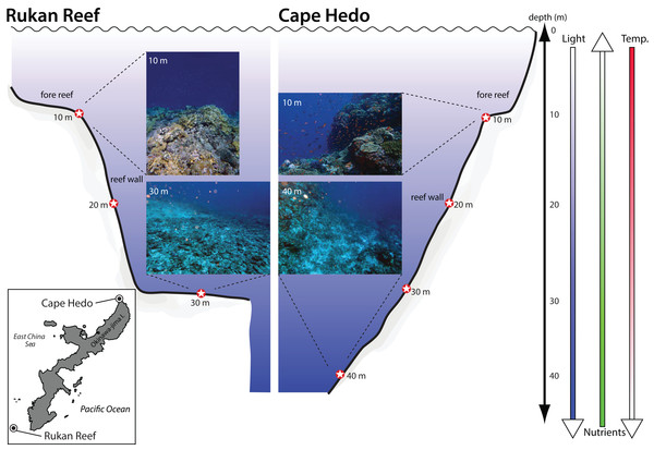 Location and depth of sediment samples collected at two coral reefs in Okinawa, Japan.