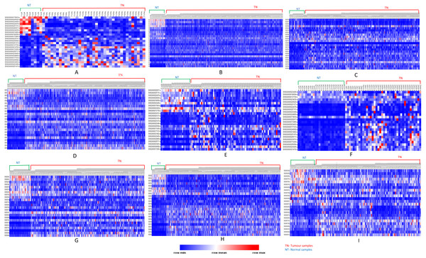 Heatmap showing common up- and down-regulated lncRNA genes in tumors.