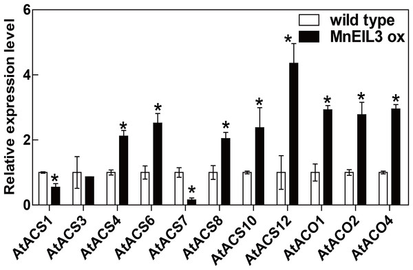 qRT-PCR analysis of changes in AtACS and AtACO genes in MnEIL3ox plants.