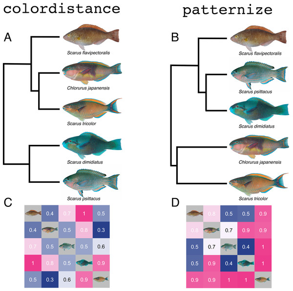 Similarity analyses produced by colordistance (A & C) and patternize (B & D) for the same set of parrotfish images.