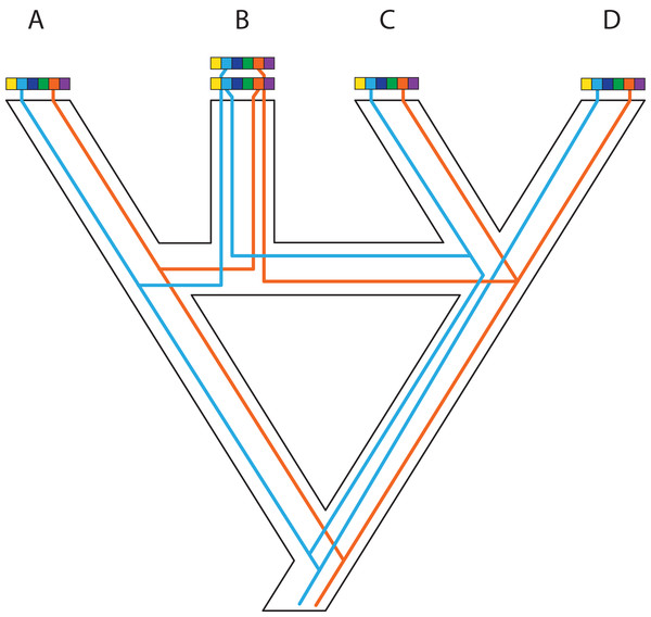 Complex patterns of gene lineages with polyploidization and interspecific gene flow.