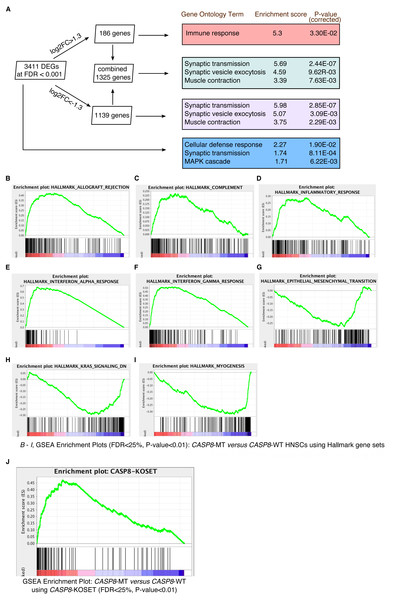 Gene enrichment analyses reveal a prominent immune signature in CASP8-MT HNSCs.