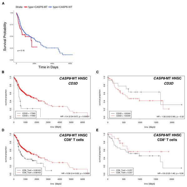 Survival analysis indicates lack of a survival advantage in CASP8-MT HNSCs in spite of their immune signature.