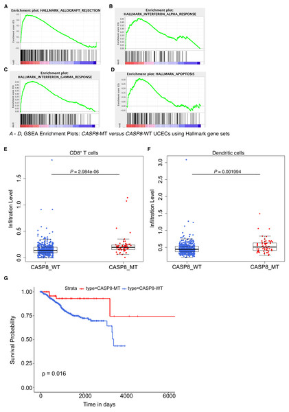 CASP8-MT UCECs display an immune gene signature, have higher numbers of certain types of infiltrating immune cells, and survive better than CASP8-WT UCECs.