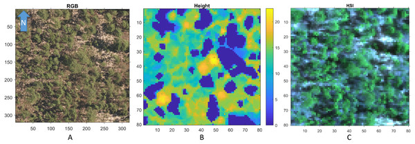 An example RGB (A), LiDAR (B), and (the RGB image generated from the corresponding) Hyperspectral image (C) of a region in OSBS.