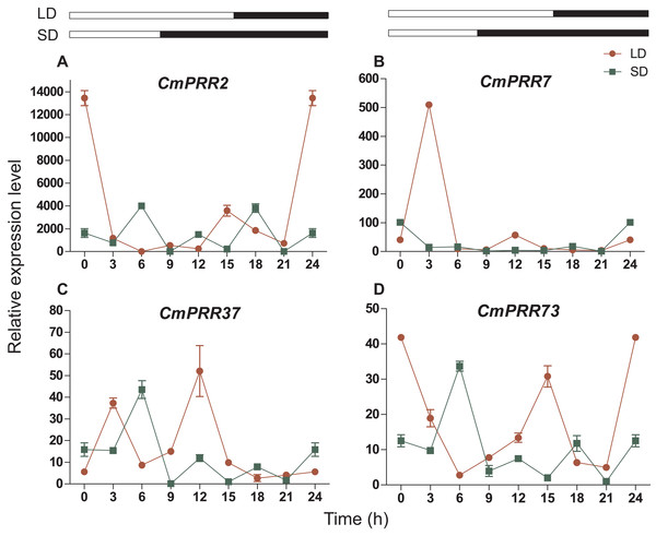 Expression pattern of CmPRRs of Zijiao in long-day and short-day photoperiod conditions.