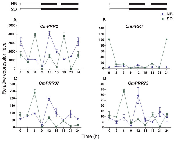 Expression pattern of CmPRRs of Zijiao in night-break condition.