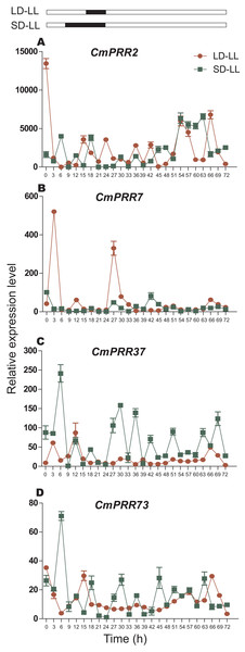 Expression pattern of CmPRRs of Zijiao in continuous light condition.