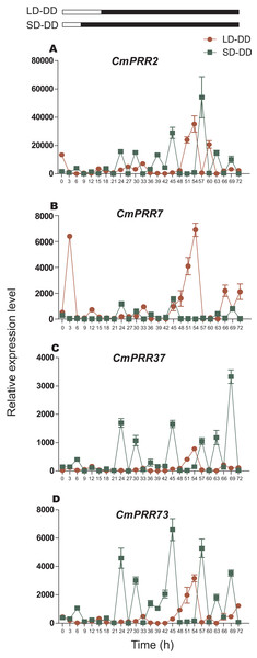 Expression pattern of CmPRRs of Zijiao in continuous dark condition.