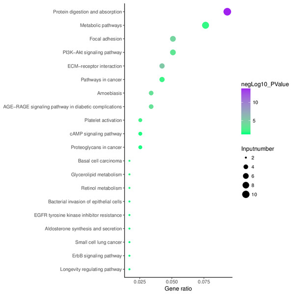 Enrichment of the aberrantly hydroxymethylated differentially expressed genes in Kyoto Encyclopedia of Genes and Genomes pathway analysis.