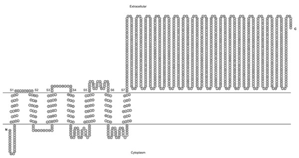 Transmembrane structure of GiK.