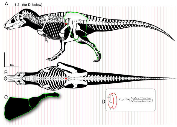 "Methods for digitizing body outlines and calculating mass properties, for ""maximum tail width"" estimate for Tyrannosaurus rex."