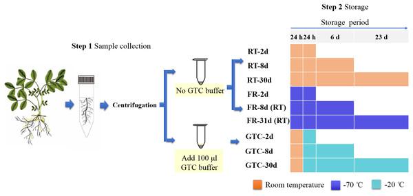 Flow chart showing experimental design.