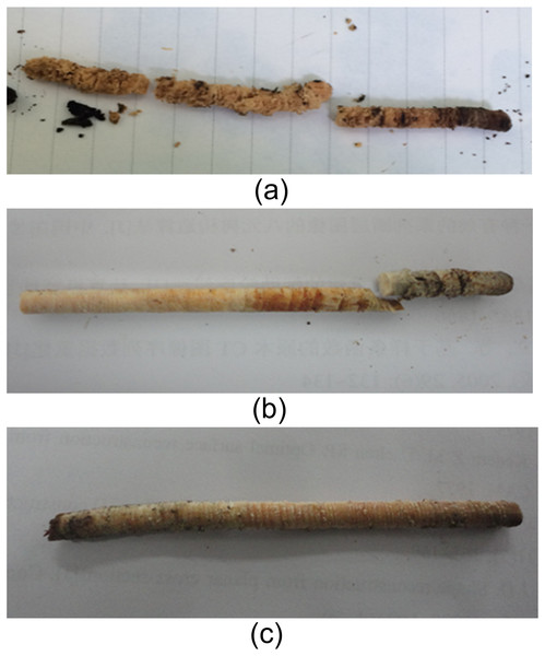 Decayed (A, B) and normal (C) wood core samples.