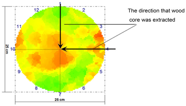 Velocity distribution of stress waves in a cross-section.