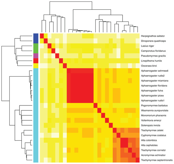 Heatmap of MASH genomic distances for all sequenced ant genomes.