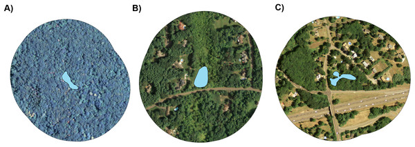 Representative aerial images of three study ponds.