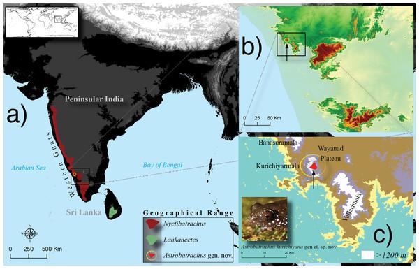 Geographical range (A) of the three genera, Nyctibatrachus (Nyctibatrachinae), Lankanectes (Lankanectinae) and the new genus Astrobatrachus (Astrobatrachinae subfam. nov.).
