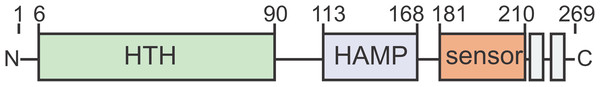ArnR and ArnR1 share an overall domain organization.