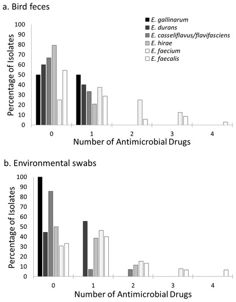 Prevalence of resistance to multiple antimicrobial drugs in Enterococcus species by site and isolate source.