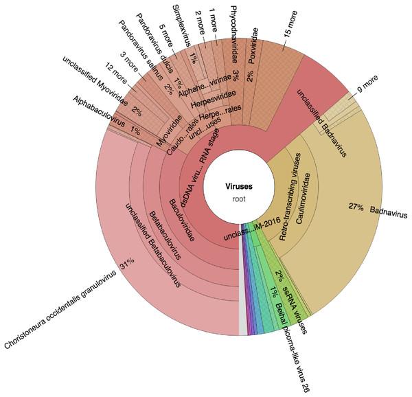 Krona graph representing DNA-Seq reads of the common bean. (Phaseolus vulgaris L.).