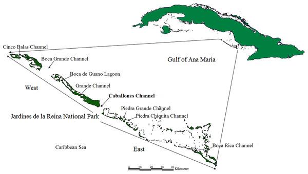 Location of study area; Jardines de la Reina National Park, Cuba.